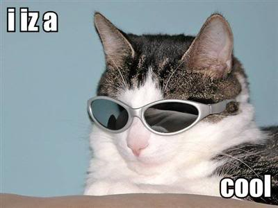 cool lolcat